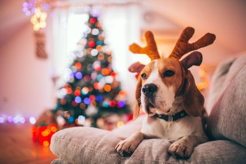 Rauhallista ja rentouttavaa joulua kotisohvalla