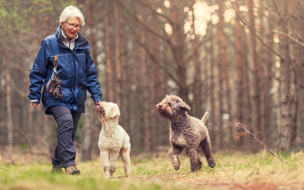 Ulkoilemassa koirien kanssa